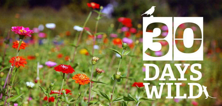 30-days-wild-june