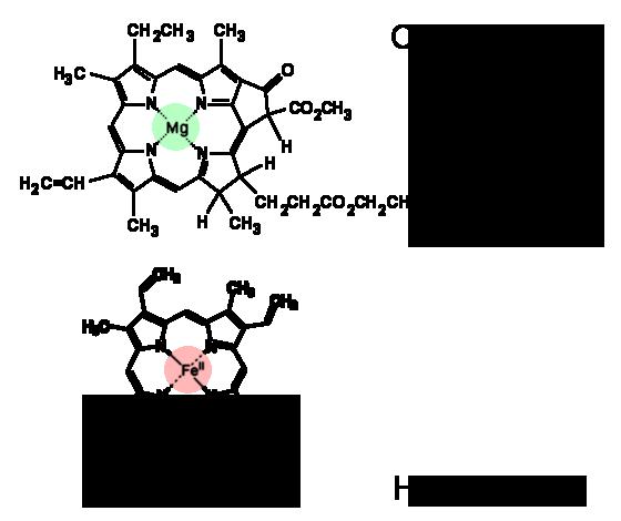 chlorophyll-haemoglobin