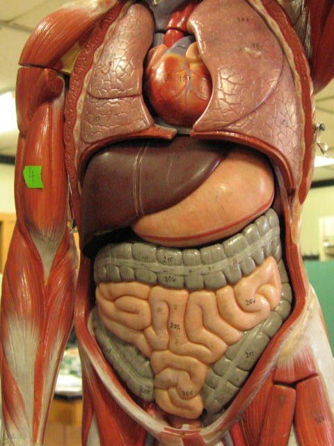 Keeping Your Digestive System Healthy