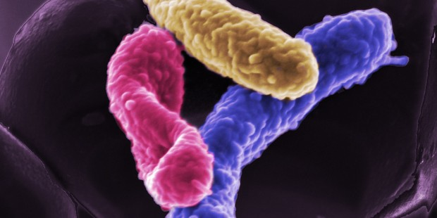 Good bacteria in your gut!