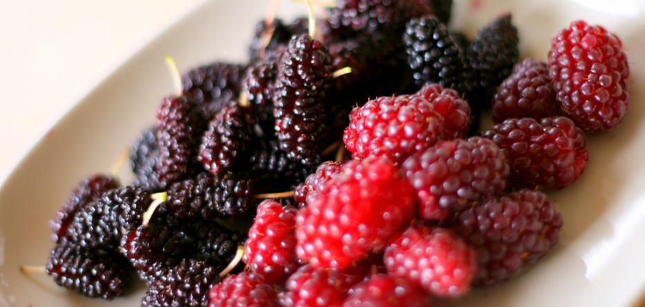 Berry's are high in vitamin c
