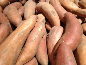 tuber-root